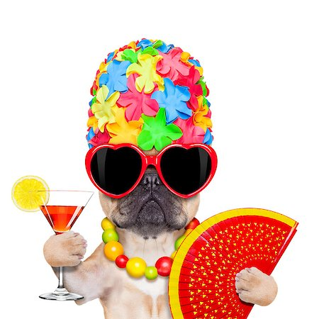 dog in heat - fawn french bulldog dog ready for summer vacation or holidays, wearing sunglasses and having a  cocktail,  isolated on white background Stock Photo - Budget Royalty-Free & Subscription, Code: 400-07976043