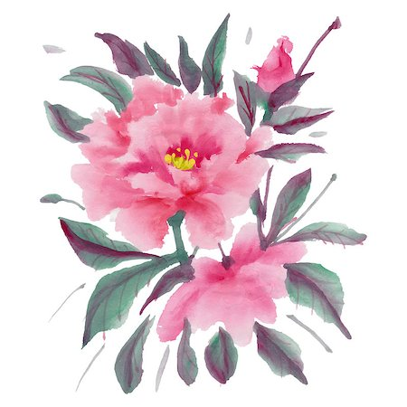 peony in vector - Watercolor  flowers isolated on a white background. Pink peony.  Vector illustration. Stock Photo - Budget Royalty-Free & Subscription, Code: 400-08016869