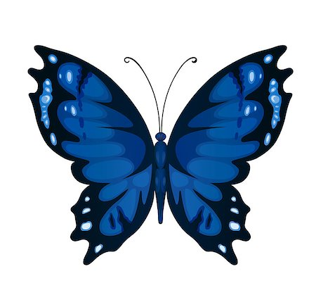 Bright butterfly for decoration design Stock Photo - Budget Royalty-Free & Subscription, Code: 400-08036522