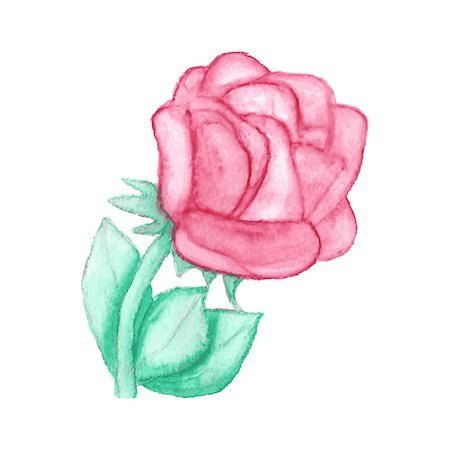 Gentle watercolor rose. Vector illustration Stock Photo - Budget Royalty-Free & Subscription, Code: 400-08038970