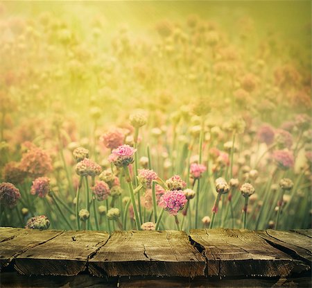 Spring background with tabletop. Flowers background. Wood table Stock Photo - Budget Royalty-Free & Subscription, Code: 400-08039968