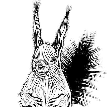 Squirrel head vector animal illustration for t-shirt. Sketch tattoo design. Stock Photo - Budget Royalty-Free & Subscription, Code: 400-08044545