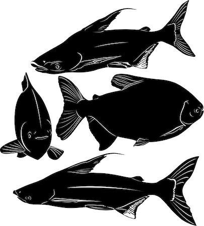 piranha fish - fish Pangasius and Colossoma Stock Photo - Budget Royalty-Free & Subscription, Code: 400-08041646