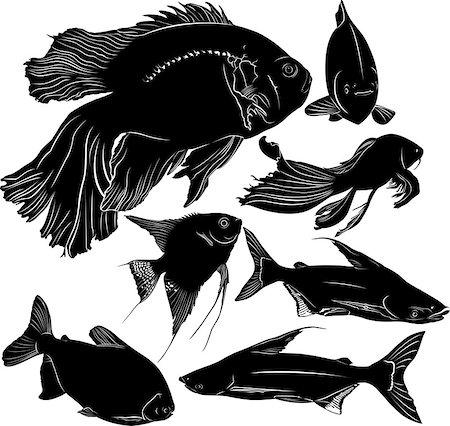 piranha fish - fish Stock Photo - Budget Royalty-Free & Subscription, Code: 400-08051820