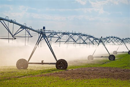 Automated Farming Irrigation Sprinklers System in Operation on Cultivated Agricultural Field Stock Photo - Budget Royalty-Free & Subscription, Code: 400-08052176
