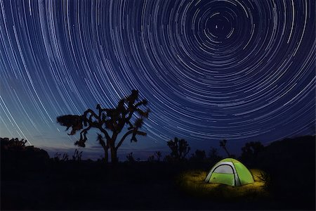 Tent Camping at Night in Joshua Tree Park Stock Photo - Budget Royalty-Free & Subscription, Code: 400-08095257