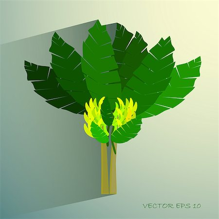 Ecological Concept, A Beautiful Tropical Banana Tree with Bananas and Banana Blossom Stock Photo - Budget Royalty-Free & Subscription, Code: 400-08098630