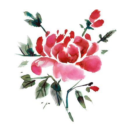 peony design vector - Watercolor  flowers isolated on a white background. Peonies.  Vector illustration. Stock Photo - Budget Royalty-Free & Subscription, Code: 400-08157250