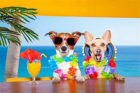 dog in heat - funny cool couple of  dogs drinking cocktails at the bar in a  beach club party with ocean view on summer vacation holidays Stock Photo - Budget Royalty-Free & Subscription, Code: 400-08158208