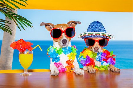 dog in heat - funny cool couple of  dogs drinking cocktails at the bar in a  beach club party with ocean view on summer vacation holidays Stock Photo - Budget Royalty-Free & Subscription, Code: 400-08158210