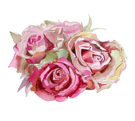 decoration wedding rose vintage - Pink  roses  isolated on a white background. Watercolor illustration. Stock Photo - Budget Royalty-Free & Subscription, Code: 400-08288313