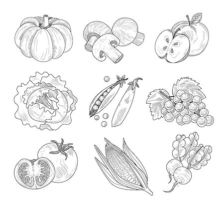 Fruit and Vegetables, Handdrawn Vector Illustration Set Stock Photo - Budget Royalty-Free & Subscription, Code: 400-08349185