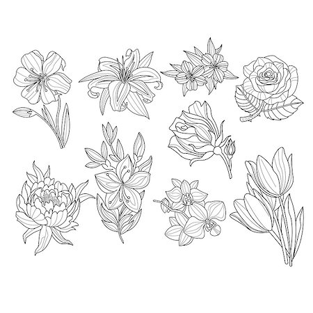 peonies clipart - Flower Set. Hand Drawn Monochrome Vector Illustration Stock Photo - Budget Royalty-Free & Subscription, Code: 400-08349196