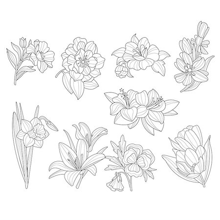 peonies clipart - Flower Collection. Hand Drawn Monochrome Vector Illustration Stock Photo - Budget Royalty-Free & Subscription, Code: 400-08349198