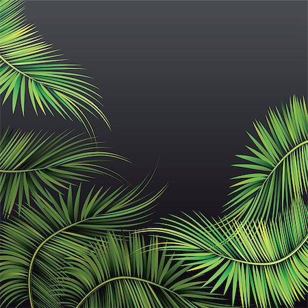 Palm tree branches on dark background. Vector illustration. Stock Photo - Budget Royalty-Free & Subscription, Code: 400-08406711