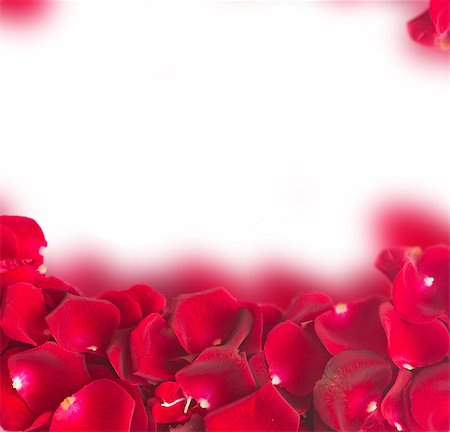 falling confetti with white background - frame of natural red rose petals  isolated on white background Stock Photo - Budget Royalty-Free & Subscription, Code: 400-08430097