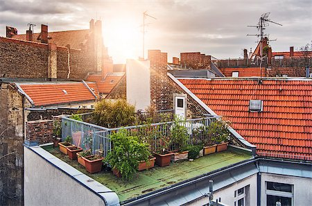 small rooftop garden with lots of potted plants on a sunny evening Stock Photo - Budget Royalty-Free & Subscription, Code: 400-08574868