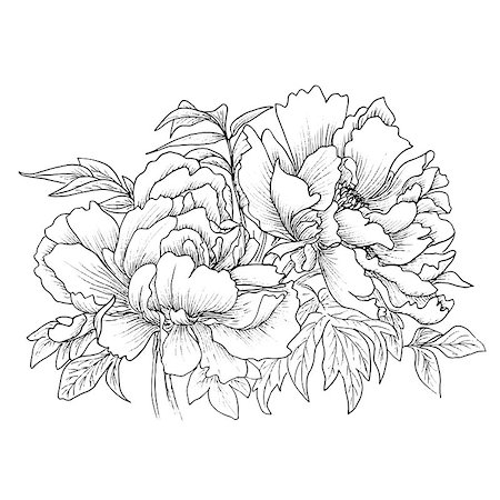 Beautiful hand drawn illustration of peony isolated on white background. Vector. Hand drawn artwork. Love concept for wedding invitations, cards, tickets, congratulations, branding, boutique logo, label Stock Photo - Budget Royalty-Free & Subscription, Code: 400-08572512