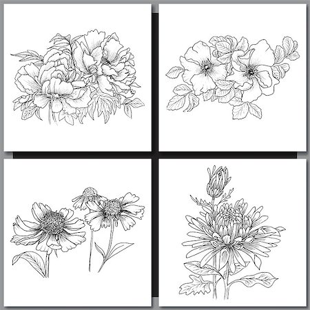 Set of Romantic vector background with hand drawn flowers isolated on white.  Ink drawing illustration. Line art sketching. Floral design for wedding invitations, cards, congratulations, branding. Stock Photo - Budget Royalty-Free & Subscription, Code: 400-08573325