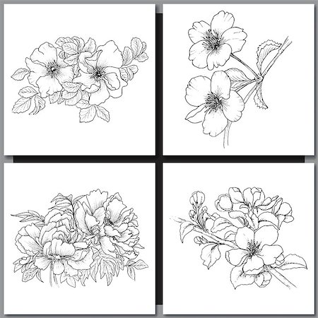 Set of Romantic vector background with hand drawn flowers isolated on white.  Ink drawing illustration. Line art sketching. Floral design for wedding invitations, cards, congratulations, branding. Stock Photo - Budget Royalty-Free & Subscription, Code: 400-08573329