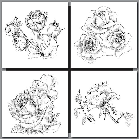 Set of Romantic vector background with hand drawn flowers isolated on white.  Ink drawing illustration. Line art sketching. Floral design for wedding invitations, cards, congratulations, branding. Stock Photo - Budget Royalty-Free & Subscription, Code: 400-08573322