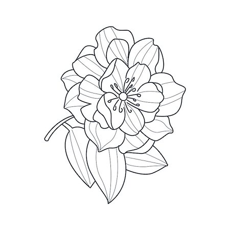 Fully Open Peony Flower Monochrome Drawing For Coloring Book Hand Drawn Vector Simple Style Illustration Stock Photo - Budget Royalty-Free & Subscription, Code: 400-08651938