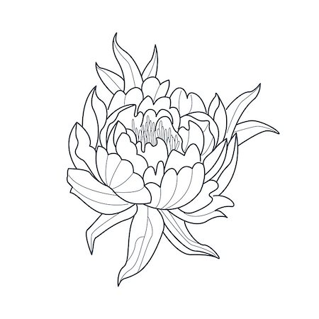 Peony Flower Monochrome Drawing For Coloring Book Hand Drawn Vector Simple Style Illustration Stock Photo - Budget Royalty-Free & Subscription, Code: 400-08651947