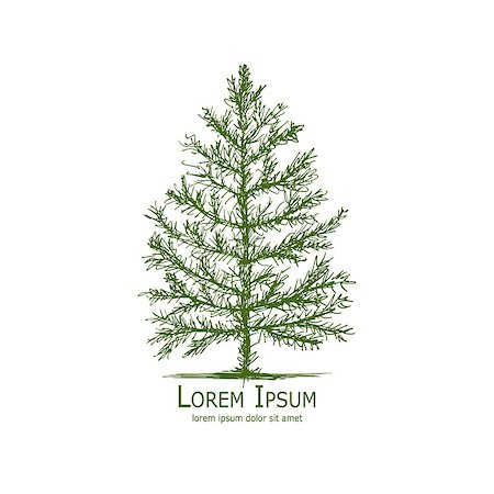 Pine tree, art sketch for your design. Vector illustration Stock Photo - Budget Royalty-Free & Subscription, Code: 400-08681270