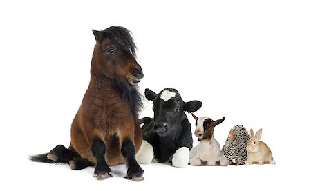 Group of farm animals isolated on white Stock Photo - Budget Royalty-Free & Subscription, Code: 400-08694009