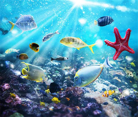 simsearch:400-04638538,k - Colourful fish and marine vegetation undersea with sunray Stock Photo - Budget Royalty-Free & Subscription, Code: 400-08705585