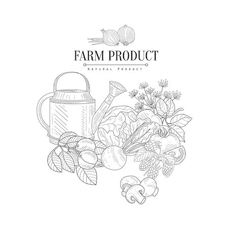 Farm Product Hand Drawn Realistic Detailed Sketch In Classy Simple Pencil Style On White Background Stock Photo - Budget Royalty-Free & Subscription, Code: 400-08711064