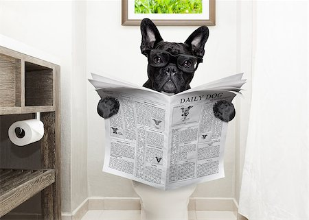 french bulldog dog , sitting on a toilet seat with digestion problems or constipation reading the gossip magazine or newspaper Stock Photo - Budget Royalty-Free & Subscription, Code: 400-08735206