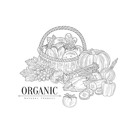 Organic Farm Products Still Life Hand Drawn Realistic Sketch. Hand Drawn Detailed Contour Illustration On White Background. Stock Photo - Budget Royalty-Free & Subscription, Code: 400-08775975