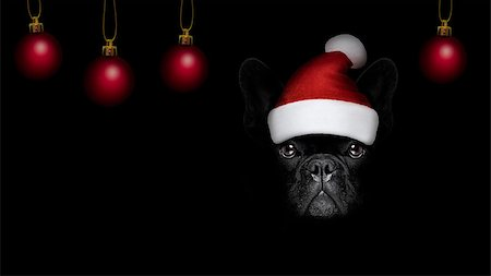 french bulldog  dog  dressed as santa claus with hat for christmas holidays isolated on black dark dramatic background Stock Photo - Budget Royalty-Free & Subscription, Code: 400-08778144