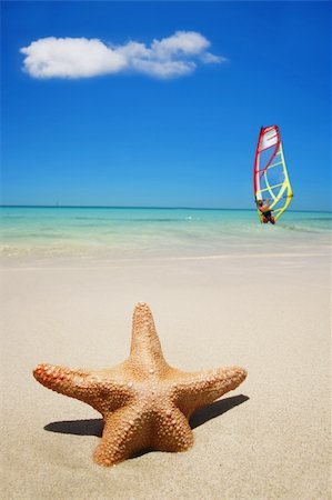 simsearch:400-04638538,k - Starfish on the beach with windsurfer Stock Photo - Budget Royalty-Free & Subscription, Code: 400-03924619