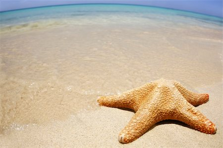 simsearch:400-04638538,k - Starfish on the beach with wide-angle distorted horizon Stock Photo - Budget Royalty-Free & Subscription, Code: 400-03936650
