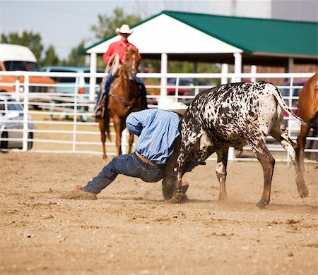 Steer wrestling at a local small town rodeo Stock Photo - Budget Royalty-Free & Subscription, Code: 400-03938790