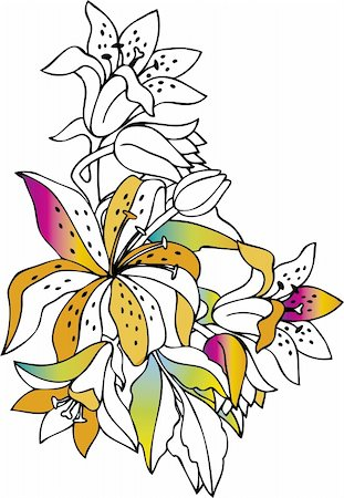 flower drawings black - Colorful lilies on white background Stock Photo - Budget Royalty-Free & Subscription, Code: 400-03931682