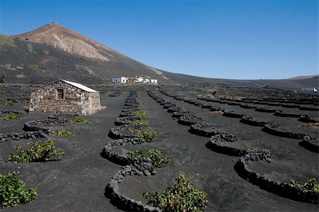 simsearch:845-03720933,k - Typical vineyard in La Geria, Lanzarote, Canary Islands, Spain Stock Photo - Budget Royalty-Free & Subscription, Code: 400-03944116