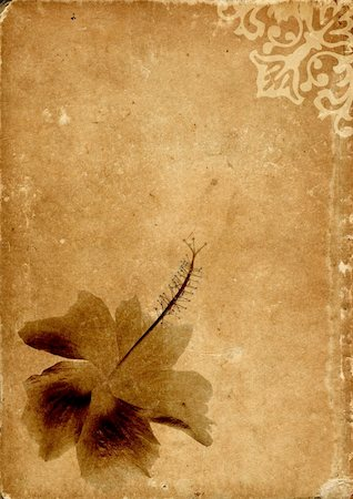scroll (design) - Vintage card with a flower - sepia tone Stock Photo - Budget Royalty-Free & Subscription, Code: 400-03942703