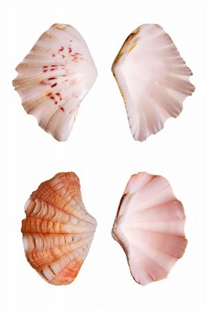 Clam seashells isolated on white background Stock Photo - Budget Royalty-Free & Subscription, Code: 400-03950002