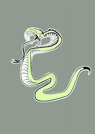 snake skin - Vector illustration. Green  Snake Stock Photo - Budget Royalty-Free & Subscription, Code: 400-03952226