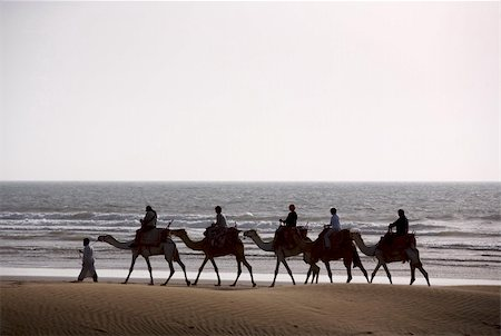 Berber Camel train on the see at sunset, Morocco Stock Photo - Budget Royalty-Free & Subscription, Code: 400-03973009