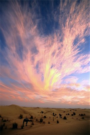 Camels against a colourful sunset sky; sahara, Algeria. Stock Photo - Budget Royalty-Free & Subscription, Code: 400-03997138