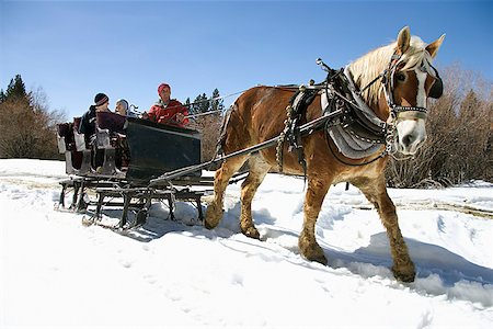 Horse drawn sleigh Stock Photo - Premium Royalty-Free, Code: 604-00762176