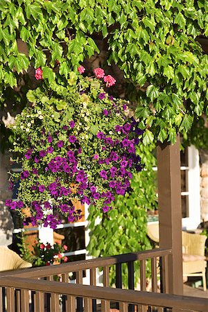 Porch and plants Stock Photo - Premium Royalty-Free, Code: 604-00937694
