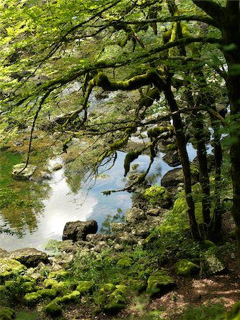 Moss Covered Tree by River Stock Photo - Premium Royalty-Free, Code: 600-05389530