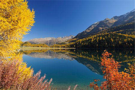 Autumn andscape, Lake Silvaplana, Engadin, Grisons, Switzerland Stock Photo - Premium Royalty-Free, Code: 600-05524311