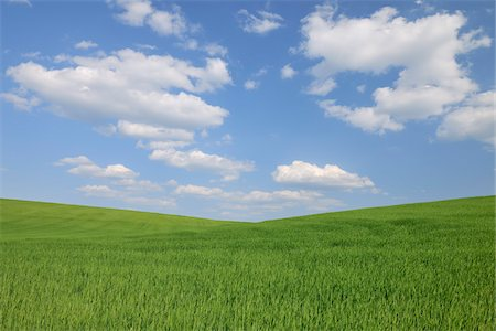 scenic and spring (season) - Grain Field, Reinheim, Darmstadt-Dieburg, Hesse, Germany Stock Photo - Premium Royalty-Free, Code: 600-05524479