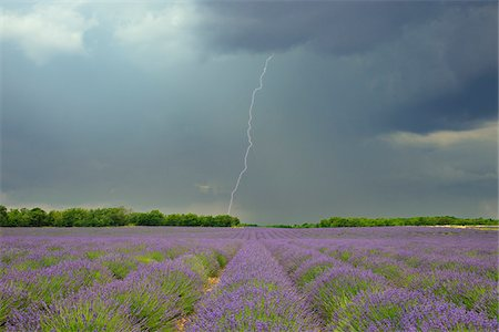Lightning Storm over Lavender Field, Valensole Plateau, Alpes-de-Haute-Provence, Provence, France Stock Photo - Premium Royalty-Free, Code: 600-05524600